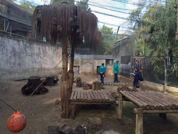 Two lions were shot and killed at the Santiago Metropolitan Zoo in the capital of Chile after a man jumped into the cats' enclosure in an apparent suicide attempt.