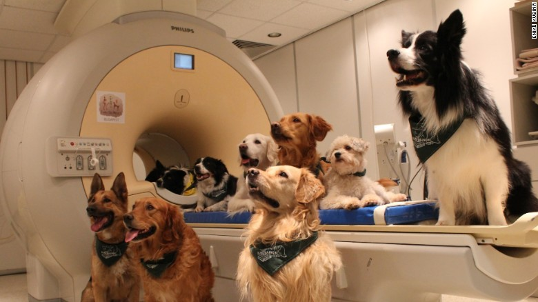 Dogs Listening
