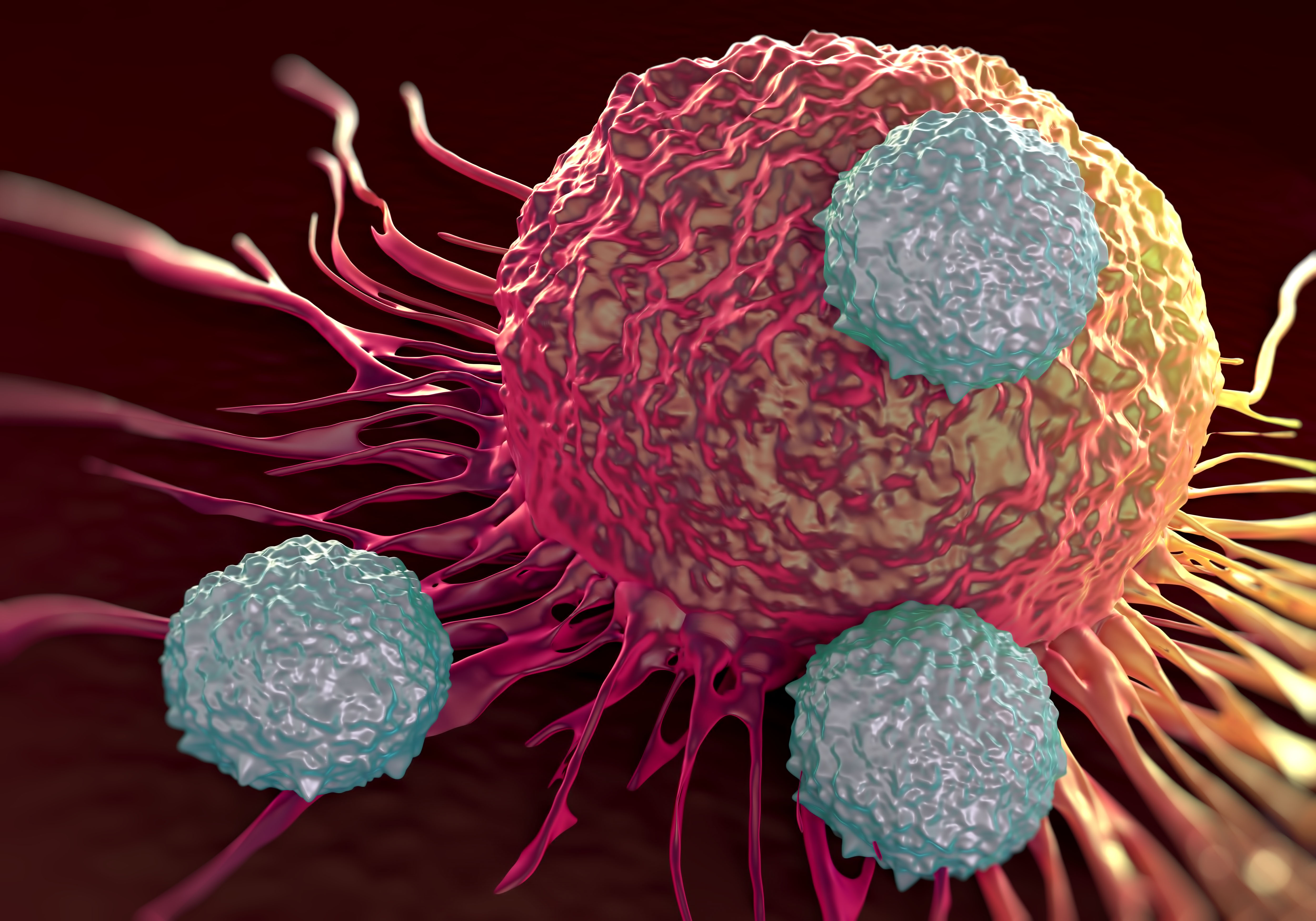 T-cells attacking cancer cell  illustration of  microscopic photos.