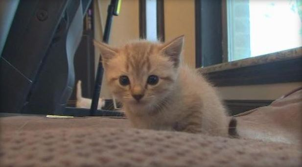 OK kitten rescued from drowning (CBS)