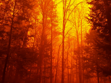 tennessee-wildfire-2