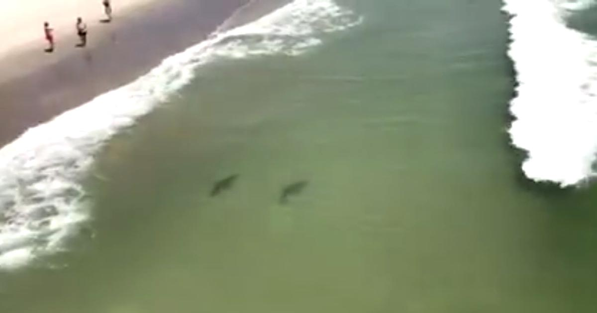 Video Shows Sharks Swimming Close To Shore At Myrtle Beach