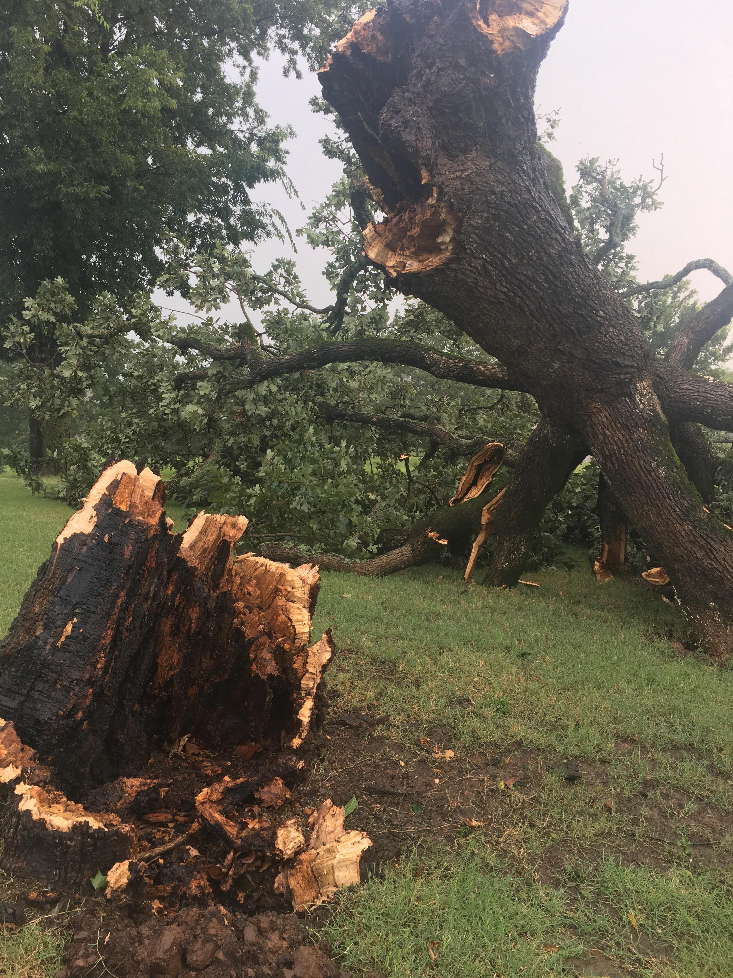 Van Buren, old oak tree fell during the storms.  Courtesy Melissa.