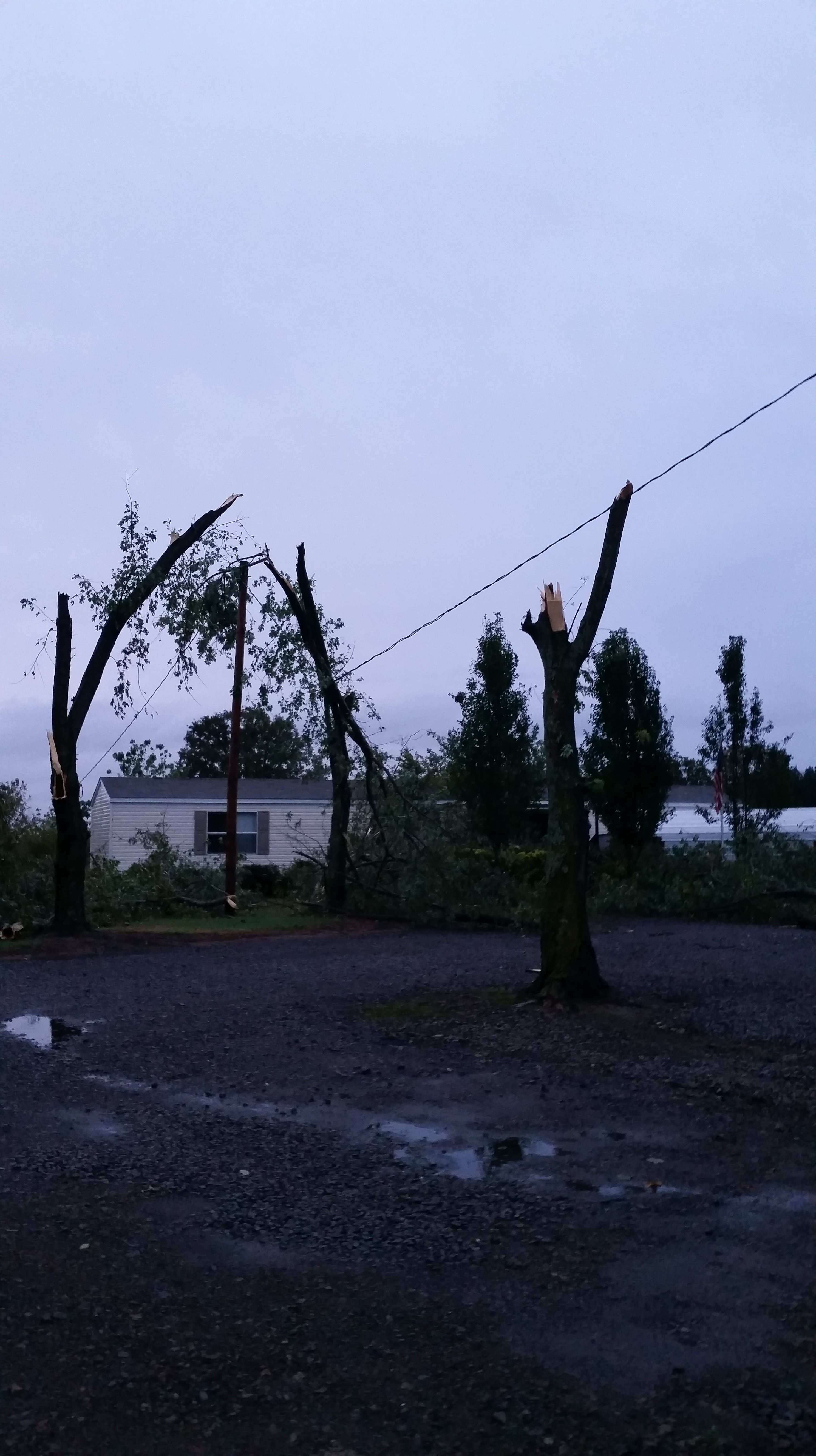 Trees damaged in Lavaca.