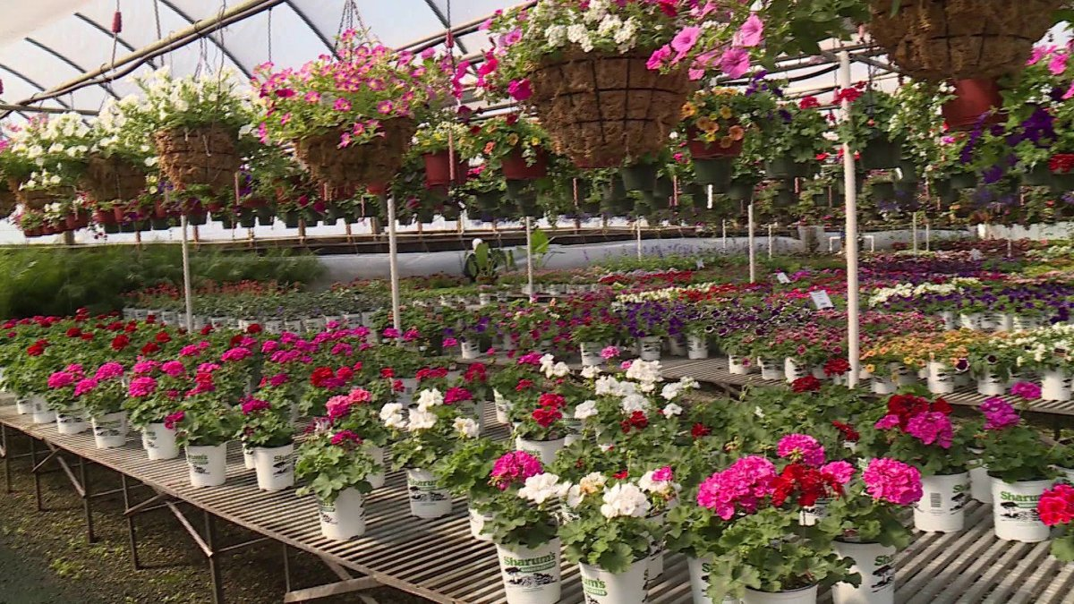Sharums Garden Center Tips New Inventory Care For Plants During