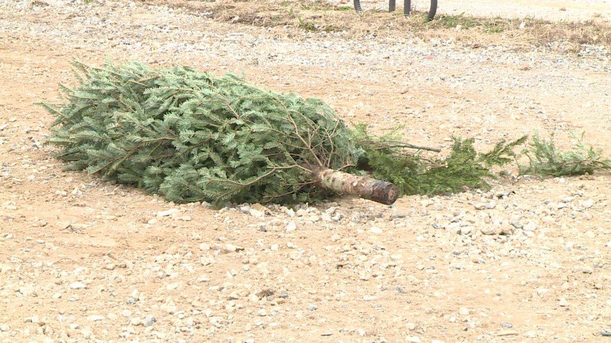 Christmas Tree Disposal Drop Off Locations