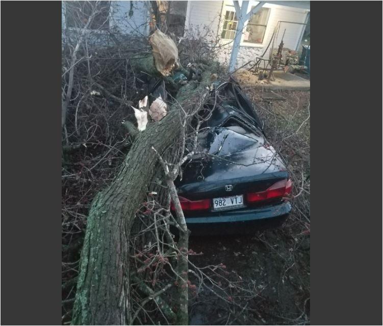 Tree on car damage in Gentry. 5NEWS viewer Wendy Adler photo.