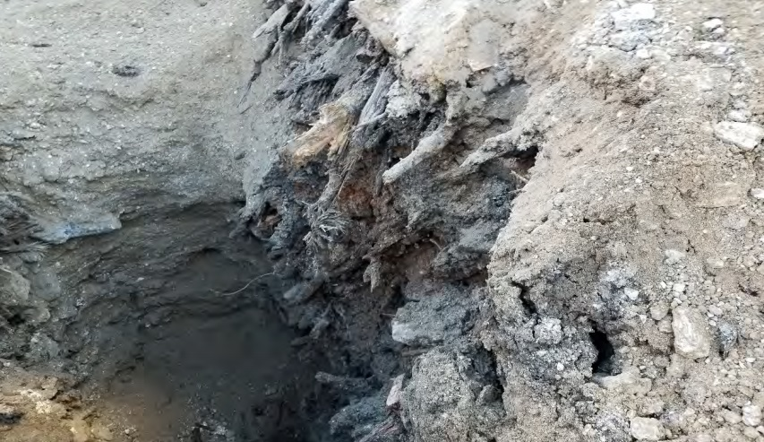 Close up of deep debris layer approximately 30-40 feet below ground surface (bgs) consisting of compacted soil, tree trunks, etc.