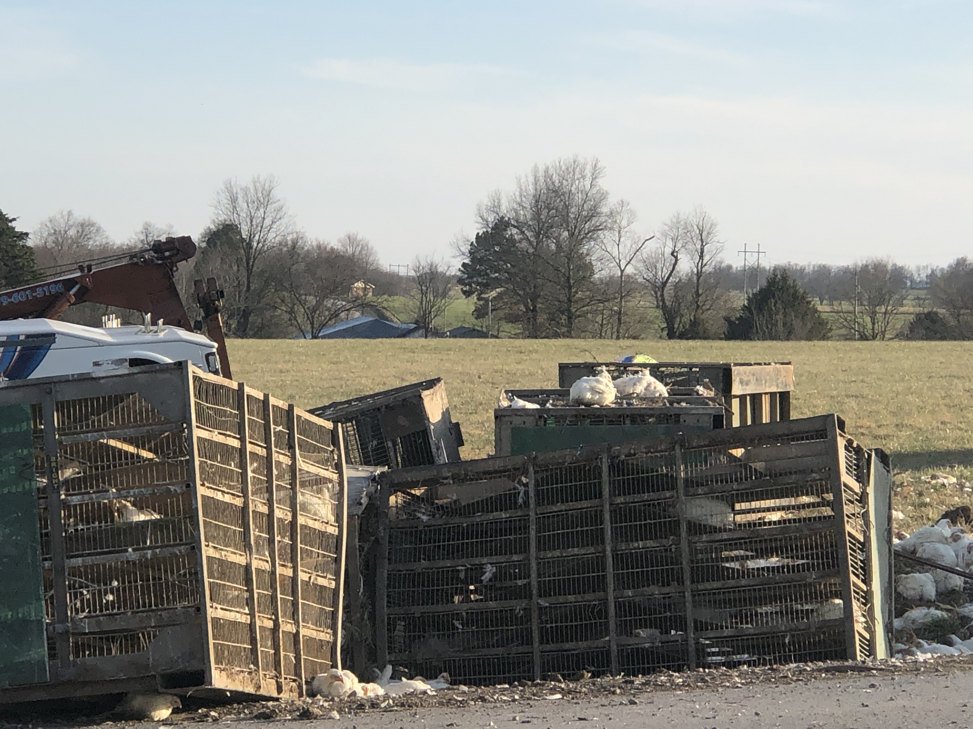 Semi-Truck Carrying Chickens Rolls Over In Highfill thumbnail