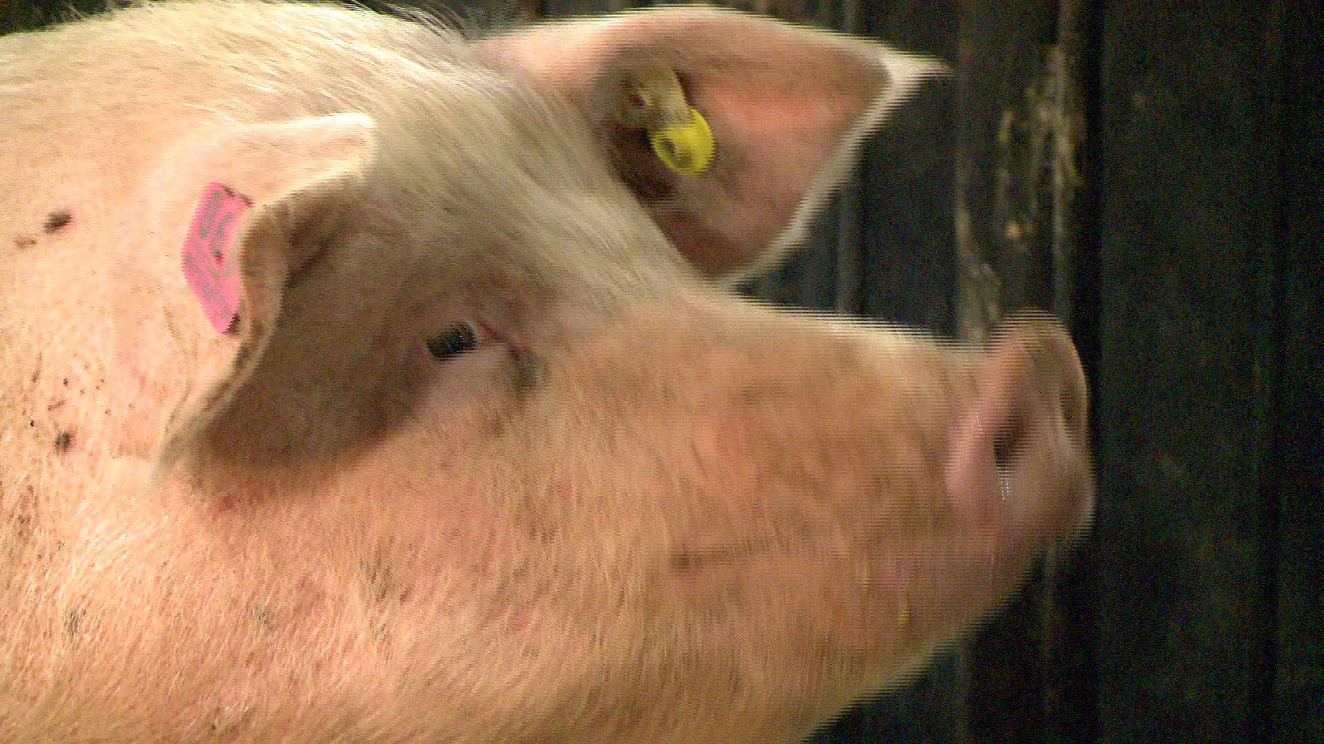 Arkansas Governor: Halt Efforts To Change Farm Permitting thumbnail