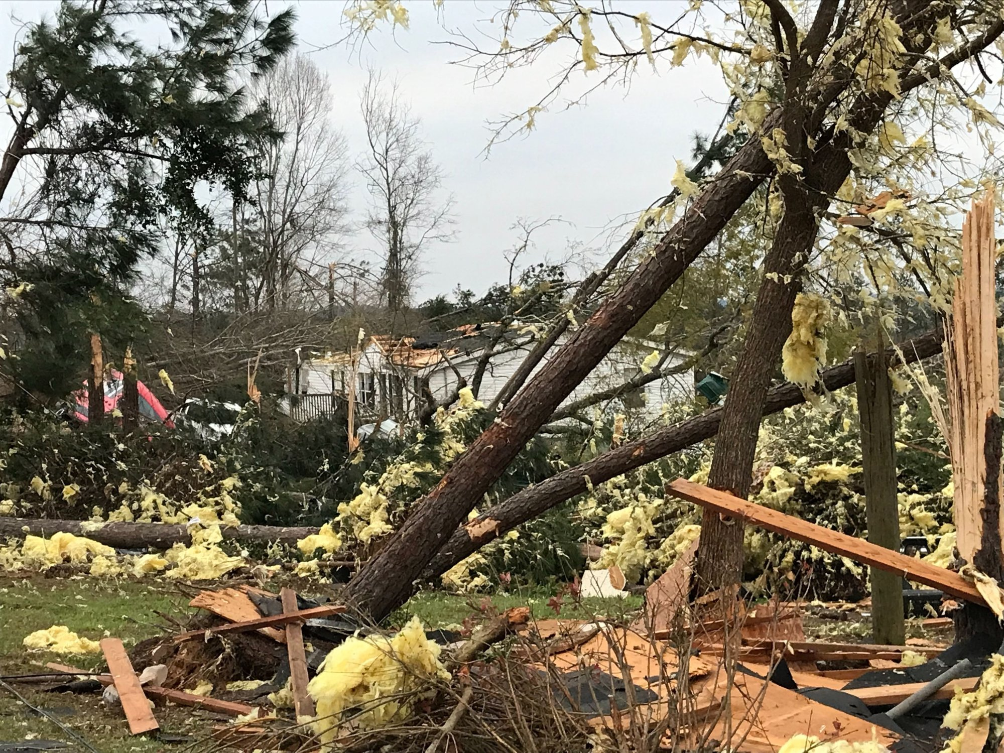 A home stands among downed trees after tornadoes passed through Opelika, Alabama, on March 4, 2019.