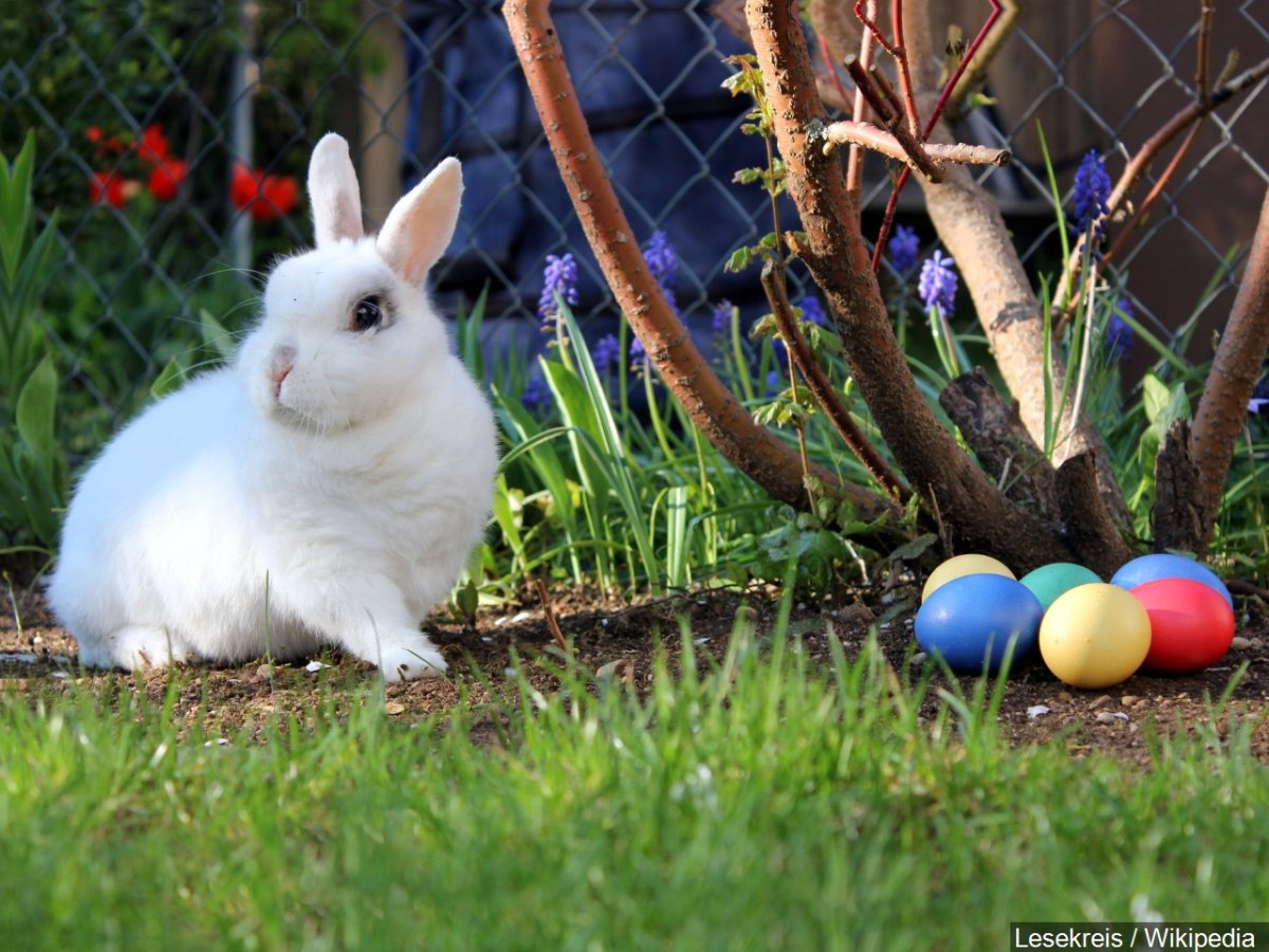 Easter Events Happening Where You Live