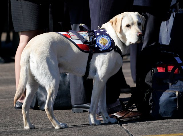 New Arkansas Bill Would Make Lying About Your Pet Being A Service Animal Illegal