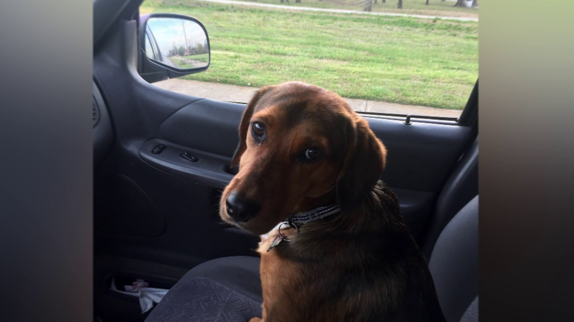 Northwest Arkansas Family's Puppy Found Hanging From Noose In Woods Behind Home thumbnail