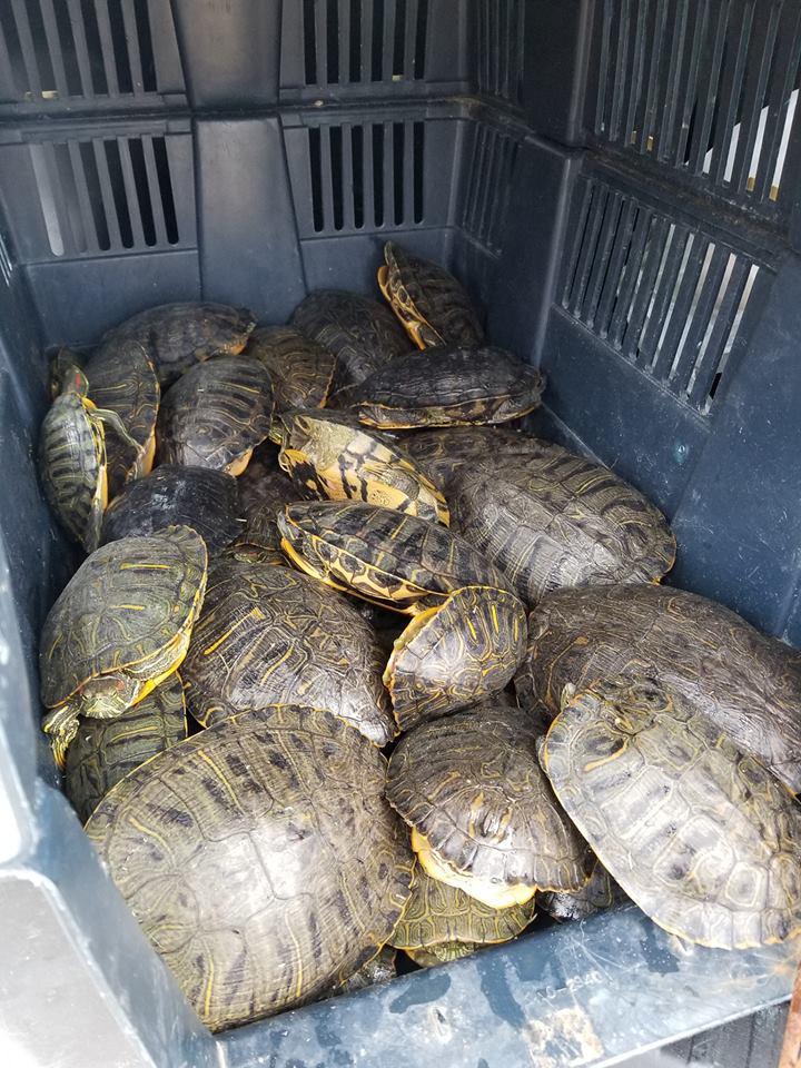 Photo Courtesy of West Memphis Animal Shelter