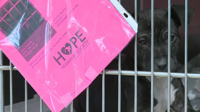 HOPE Humane Society Breaks Contract With The City Of Fort Smith