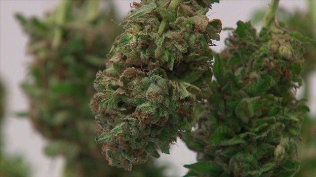 Third Arkansas Medical Marijuana Dispensary Approved To Open