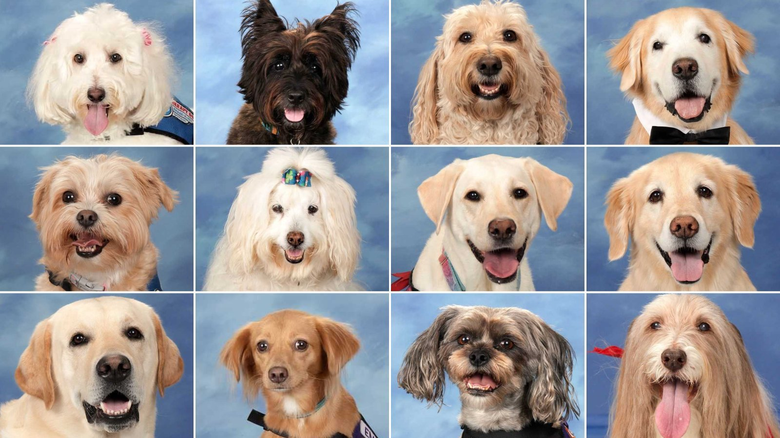 Parkland Therapy Dogs Have Their Own Special Yearbook Page thumbnail
