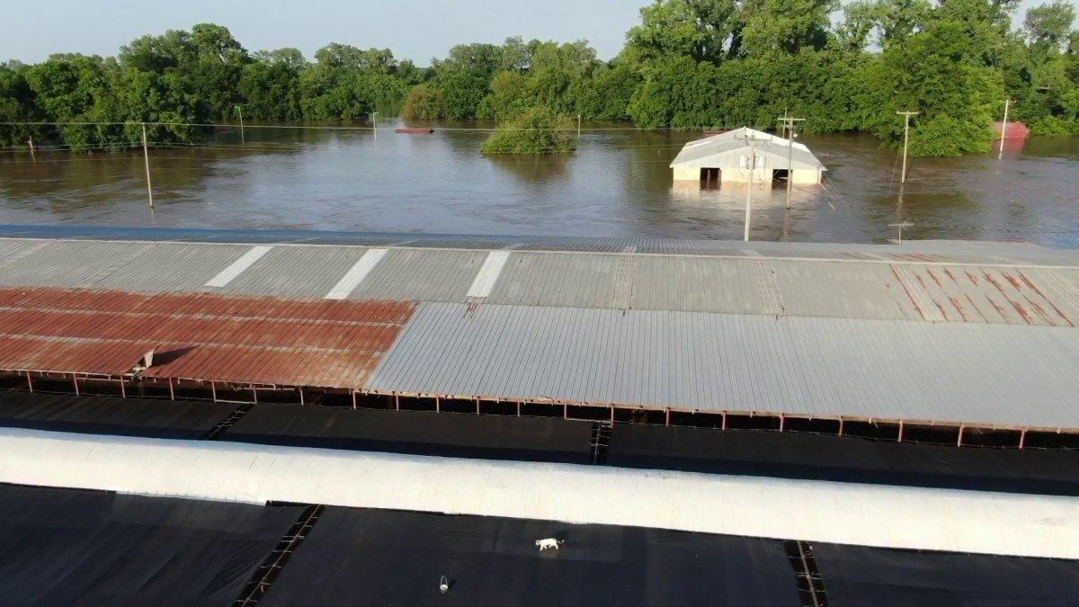 SKY5 Helps Stranded Cat Over Arkansas River Flood