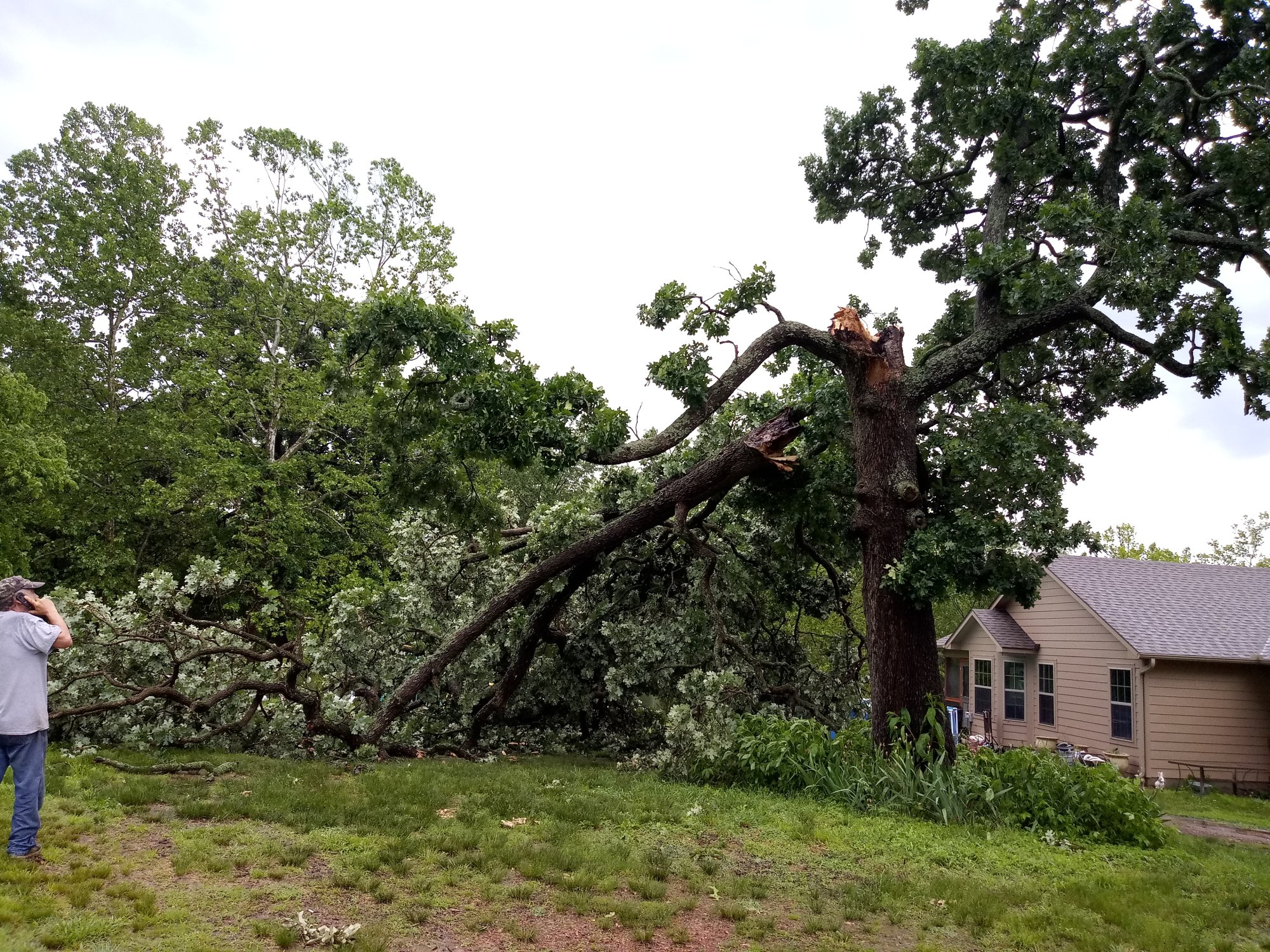 Storm damage in Gentry (Courtesy of Alesia Hodge)