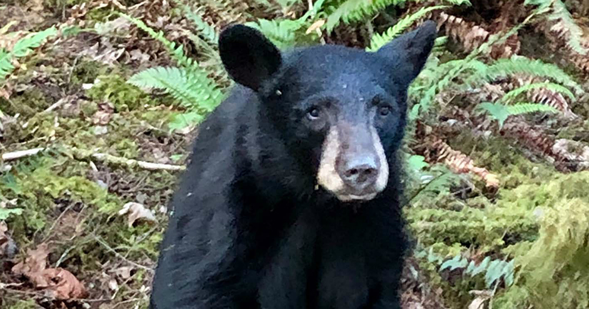 Heartbreaking reason this baby bear was killed in the US