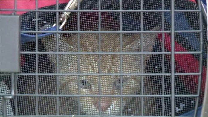 Cat Rescued From Flood Waters Near Moffett