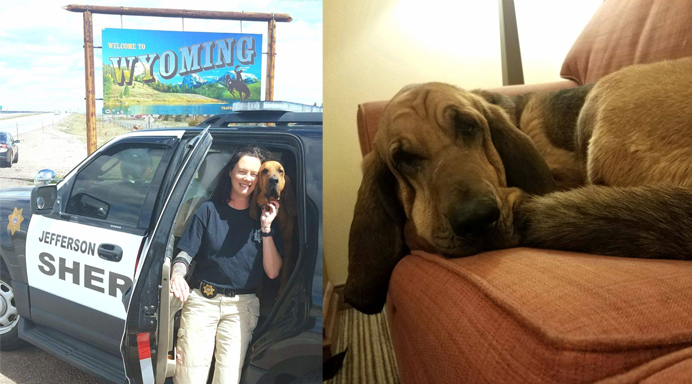 Bloodhound Finds Missing 12-Year-Old Girl In Wyoming