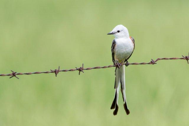 Arkansas Photographer To Present Wildlife Program At Hobbs State Park