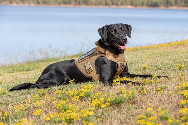 Nation's First Water Leak Detection Dog Graduates Arkansas Paws In Prison Program